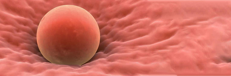 Florida Institute for Reproductive Medicine